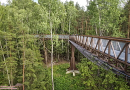 Treetop Walking Path 2
